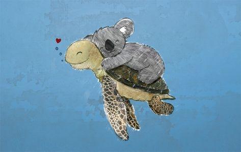 Koala and Turtle Love
